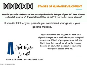 5 stages of human development