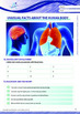 Health - Unusual Facts About The Human Body - Grade 12