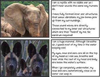 Hear Here! Animal Adaptation Matching Activity