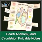 Heart Anatomy & Circulation Foldable Notes & Coloring