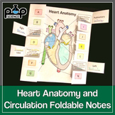 Heart Anatomy & Circulation Foldable
