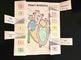 Heart Anatomy & Circulation Foldable