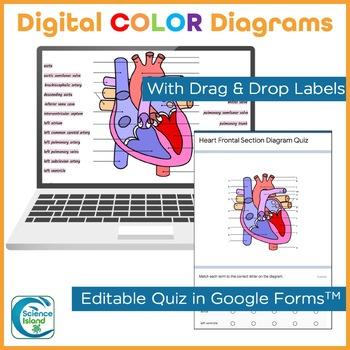 Heart Anatomy Diagrams