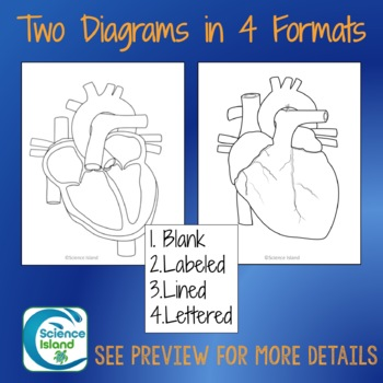 Heart Diagrams: Anterior and Frontal Section with Quizzes