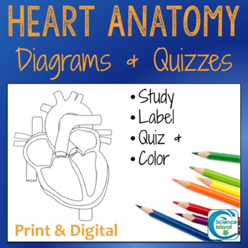 Heart Diagrams: Anterior and Frontal Section with Quizzes ...