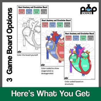 Heart Anatomy and Circulation Board Game