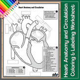 Heart Anatomy and Circulation Worksheet: Color & Label
