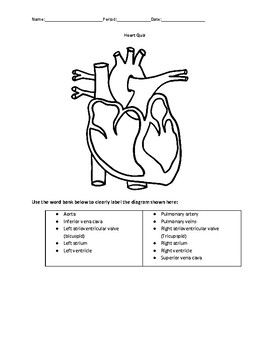 Heart Anatomy and Function Quiz