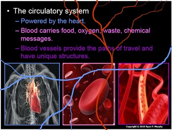 Heart, Blood, Circulatory System Lesson