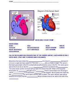 Heart/Blood Pathway (Biology)