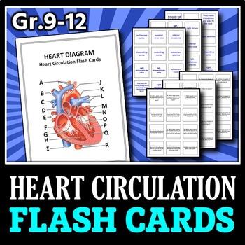 Heart Circulation - Flash Cards