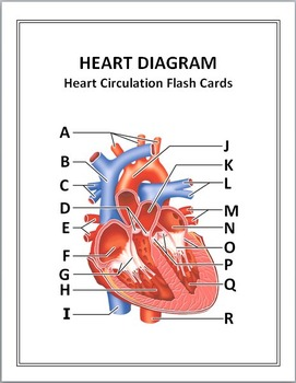 Heart circulation flash cards by tangstar science tpt heart circulation flash cards ccuart Image collections