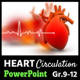 Heart Circulation - PowerPoint {Editable}