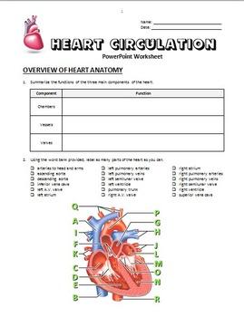 Heart Circulation - PowerPoint Worksheet