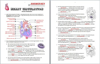 heart circulation review worksheet editable by tangstar science. Black Bedroom Furniture Sets. Home Design Ideas