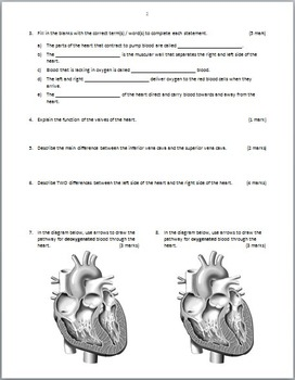 Heart Circulation - Test {Editable}