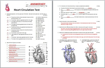 heart circulation test editable by tangstar science tpt. Black Bedroom Furniture Sets. Home Design Ideas