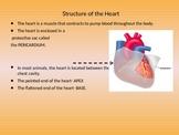 Heart-Circulatory System