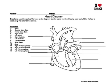 The Heart Diagram Worksheets Teaching Resources Tpt