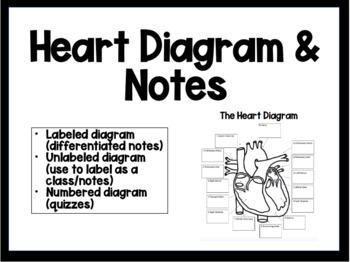 Heart Diagram by Science is my Jam | Teachers Pay Teachers