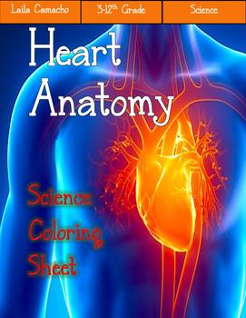 Heart Anatomy Craft