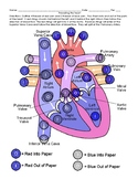 Heart Diagram and Modeling Blood Flow Activity