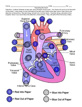 heart diagram and modeling blood flow activity by ruizscience | tpt  teachers pay teachers