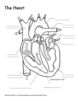 Heart Diagrams For Labeling And Coloring With Reference Chart And