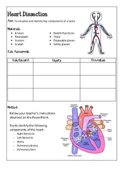 Heart Dissection Handout