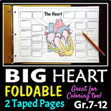 Heart Structure Foldable - Big Foldable for Interactive Notebooks or Binders