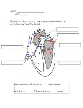 Heart Labeling Worksheet