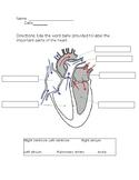Heart Labeling Worksheet