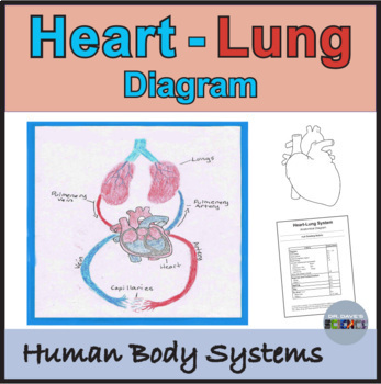 Respiratory and Circulatory Systems: Heart Lung Diagram
