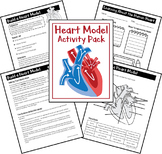 Heart Model Activity and Worksheets
