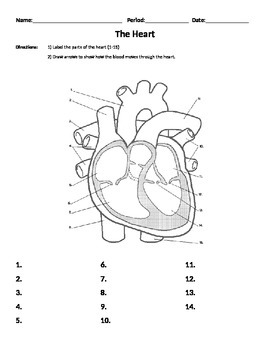 heart worksheet parts and flow organs body systems cardiovascular system. Black Bedroom Furniture Sets. Home Design Ideas