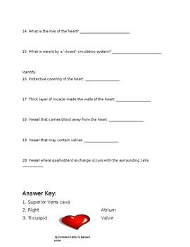 Heart and Blood Vessel Worksheet