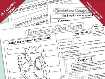 High School Biology: Heart and Circulation Worksheet Pack | TpT