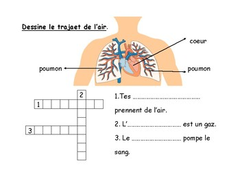 Heart and Lungs (french immersion1st grade) Le coeur et les poumons