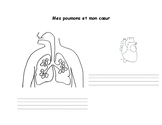 Heart and Lungs (french immersion1st grade) Le coeur et le