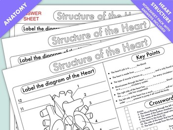 High School Biology: Heart Structure and Function Worksheet Pack