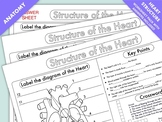 Heart structure and function worksheets