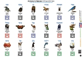 Hebrew Animals and Common Home Objects (108 images with sp