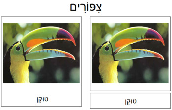 Hebrew - Bird Cards
