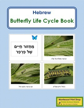 Hebrew - Butterfly Life Cycle Book