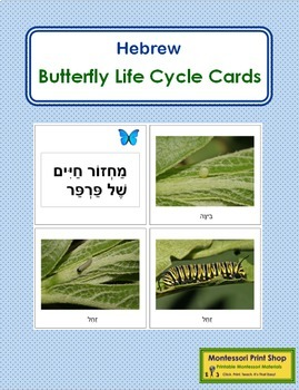 Hebrew - Butterfly Life Cycle Cards