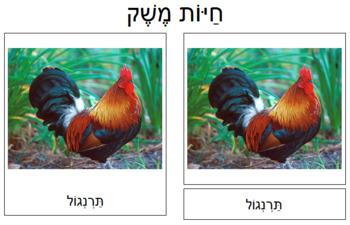 Hebrew - Farm Animal Cards