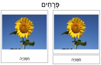 Hebrew - Flower Cards: Set 1