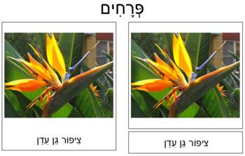 Hebrew - Flower Cards: Set 2