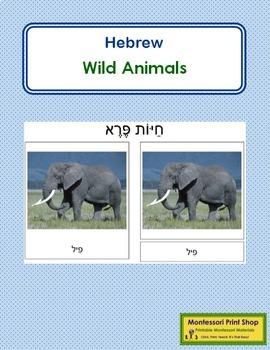 Hebrew - Wild Animal Cards