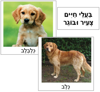 Hebrew - Young and Adult Animals - Lrg